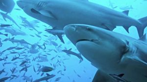 อ.ธรณ์ แนะอย่าวิตก ข่าวฉลามกัดคน ที่ จ.พังงา แต่ให้ระวังตอนเล่นน้ำ