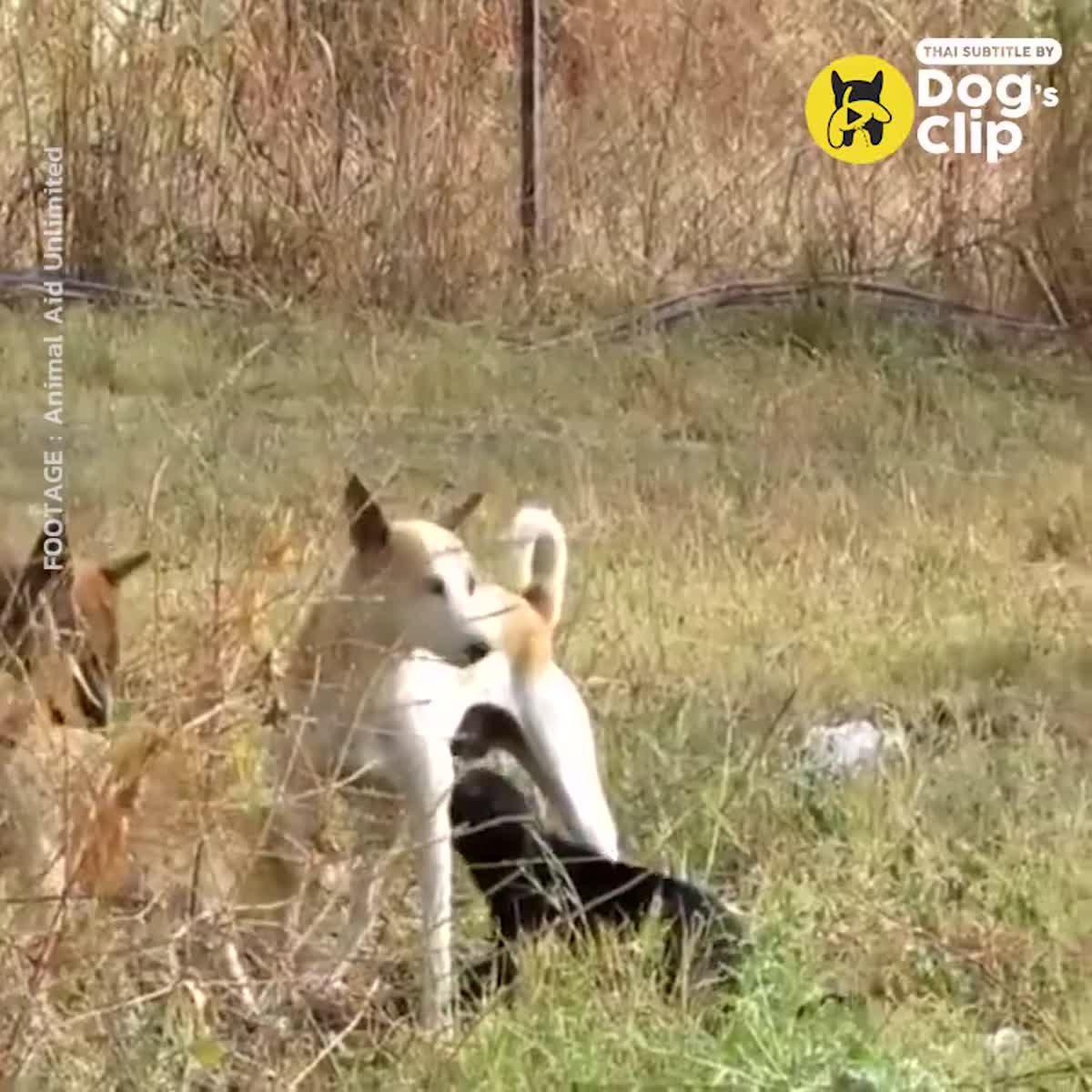 ภารกิจช่วยน้องหมาที่ตกลงไปในท่อ