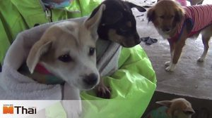 วอนบริจาคช่วย หมา-แมว 400 ชีวิต หลังต้องเผชิญความหนาวเย็น