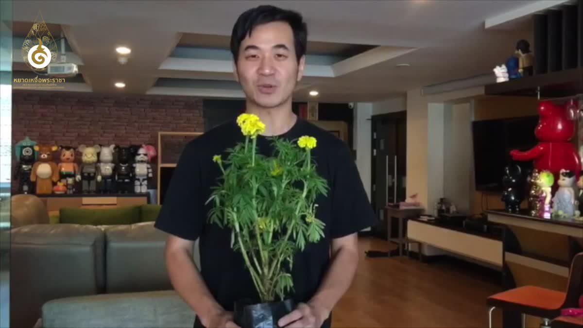 """ทัพศิลปินชวนชาวไทยร่วมงาน """"หยาดเหงื่อพระราชา"""" รวมใจปลูกดาวเรือง 1 ต.ค.นี้"""
