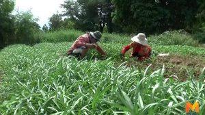 รัฐดัน พ.ร.บ.ขายฝาก คุ้มครองดูแลเกษตรกรผู้มีรายได้น้อย ไม่ให้ถูกยึดที่ดิน