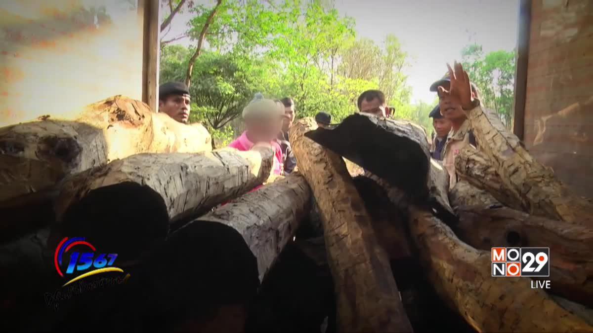 การแจ้งเบาะแสลักลอบตัดไม้พะยูง จังหวัดศรีสะเกษ (ตอนที่ 5)