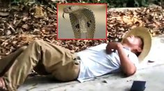 เกือบหล่อแล้ว!! หนุ่มจีนโชว์จับ งูจงอาง ด้วยมือเปล่า แต่ดันพลาดท่าโดนฉกจนเสียชีวิต….