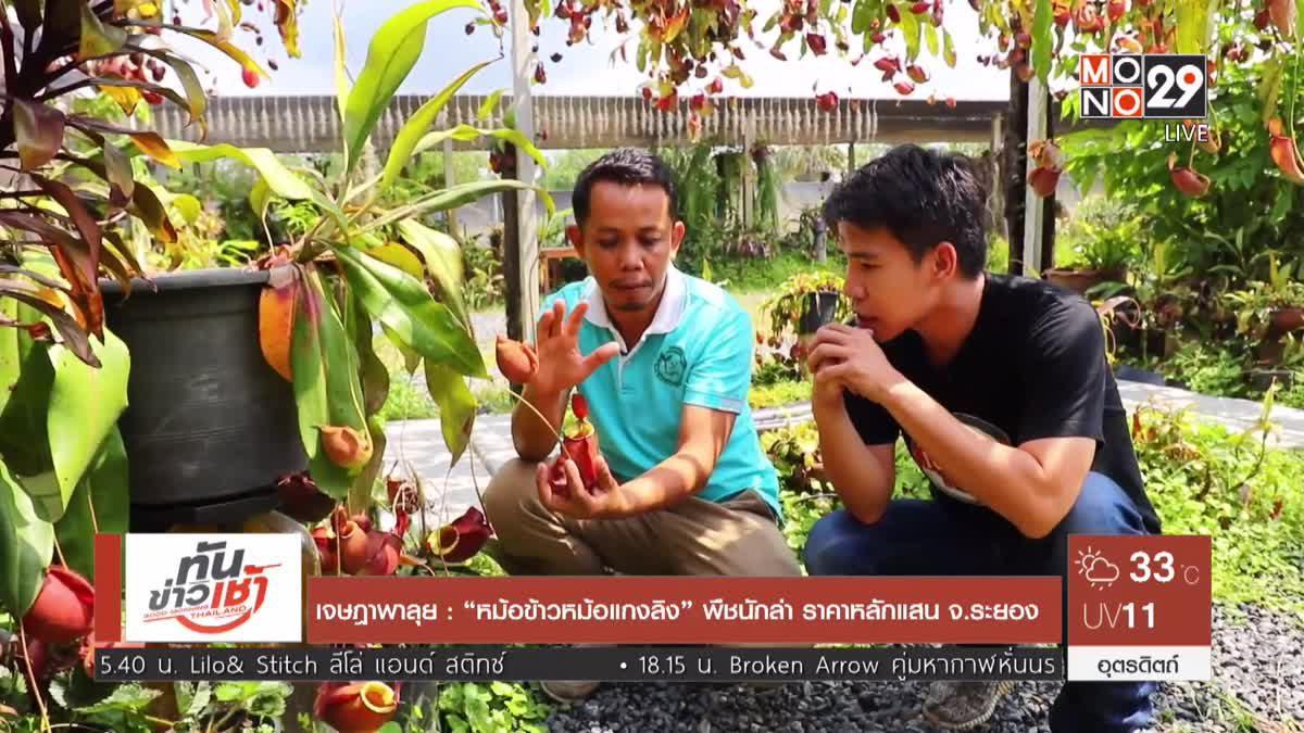 """เจษฎาพาลุย : """"หม้อข้าวหม้อแกงลิง"""" พืชนักล่า ราคาหลักแสน จ.ระยอง"""