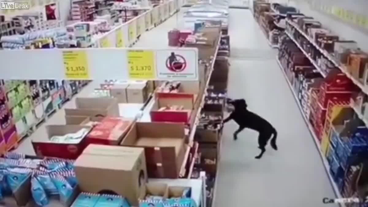 ความหิวมันไม่เข้าใครออกใคร! สุนัขแสนรู้ เข้ามาขโมยของกินใน ซูเปอร์มาร์เก็ต