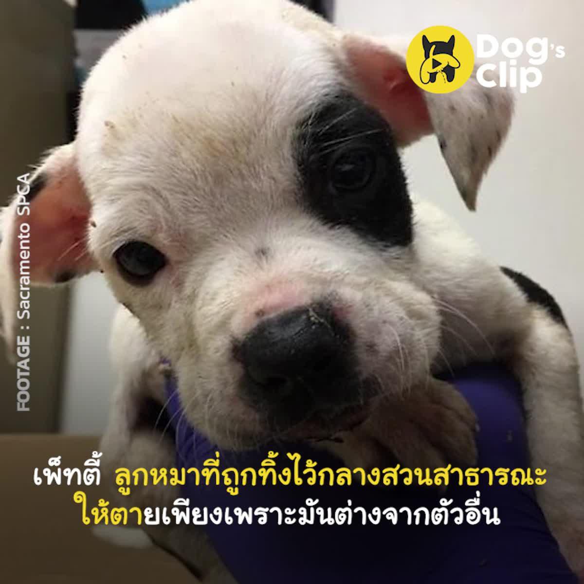 ลูกหมาตัวน้อยที่ถูกทิ้งไว้ให้ตายเพียงเพราะเขาไม่เหมือนตัวอื่น | Dog's Clip