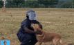 การฝึกสุนัขดมกลิ่นของแอฟริกาใต้