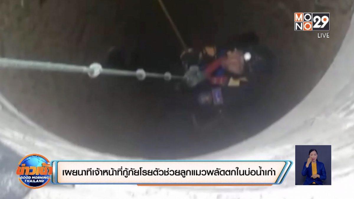 เผยนาทีเจ้าหน้าที่กู้ภัยโรยตัวช่วยลูกแมวพลัดตกในบ่อน้ำเก่า