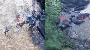 พบซากช้างป่า พลัดตกเหวนรกเพิ่มอีก 5 ตัว รวมตาย 11