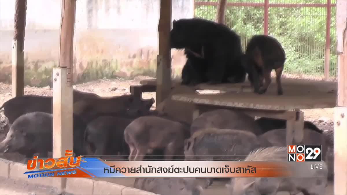 หมีควายสำนักสงฆ์ตะปบคนบาดเจ็บสาหัส