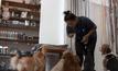 ร้านอาหารเพื่อสุนัขในพนมเปญ