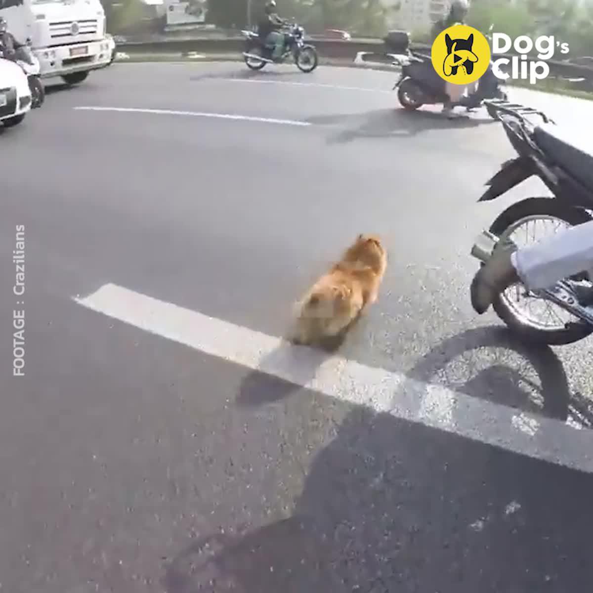 กลุ่มไบค์เกอร์หยุดรถเพื่อช่วยน้องหมาที่ตกจากรถ