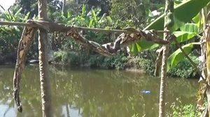 สลด! หนุ่มลมชักกำเริบ พลัดตกสระน้ำสวนลำไยเพื่อนบ้านดับ