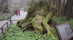 ต่างประเทศ: อาลีซาน Alishan แดนต้นไม้มหัศจรรย์ของไต้หวัน
