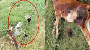 เรือนจำกลางเมืองคอน ดักไฟฟ้าในป่าละเมาะ ช็อตวัวชาวบ้านตายสยอง