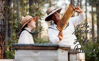 The Secret Life of Bees สูตรรักรสน้ำผึ้ง