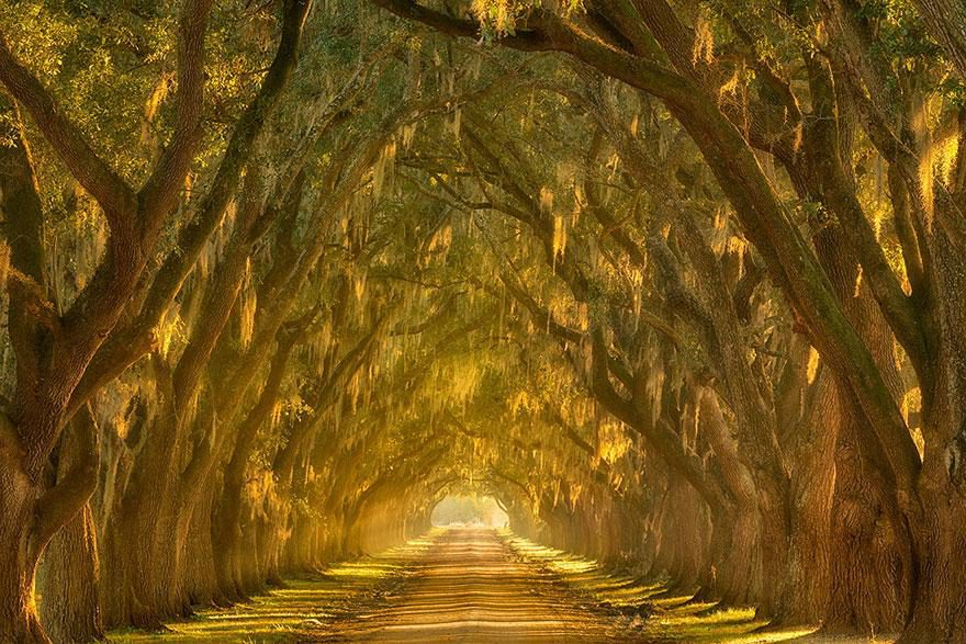 oak-alley-along-the-mississippi-river-outside-new-orleans-louisiana