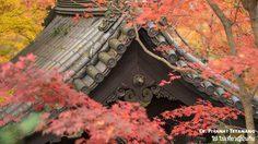 [รีวิว] จุดชมใบไม้เปลี่ยนสี ในเกียวโต ที่วัด Enkoji & Eikando