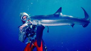 Playing with Sharks ภาพยนตร์สารคดี เจาะชีวิตนักดำน้ำผู้พิทักษ์ฉลาม