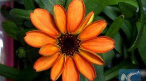 สุดยอด! นักบินอวกาศ ปลูกดอกไม้นอกโลกสำเร็จเป็นครั้งแรก