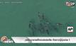 ฉลามบุกชายฝั่งออสเตรเลีย กัดชาวญี่ปุ่นตาย 1