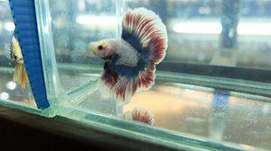 ชมปลาสวยงาม ที่ ฟิวเจอร์พาร์ค งานวันประมงน้อมเกล้าฯ ครั้งที่ 27