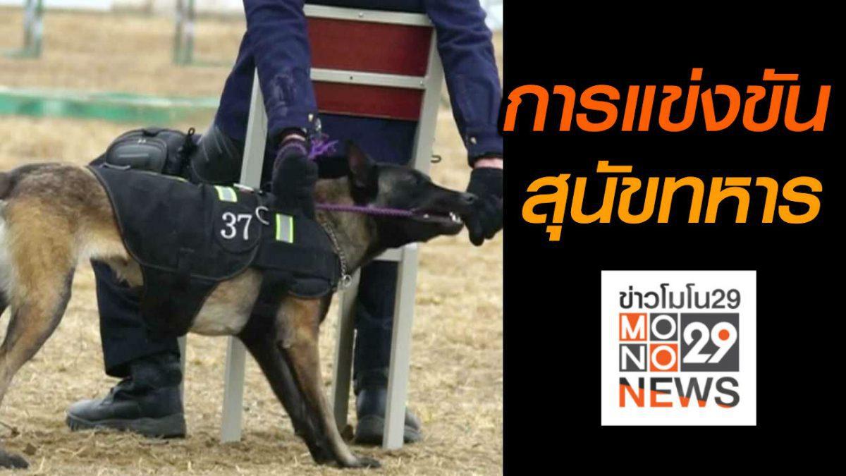 #เรื่องเล่ารอบโลก การแข่งขันสุนัขทหารในจีน