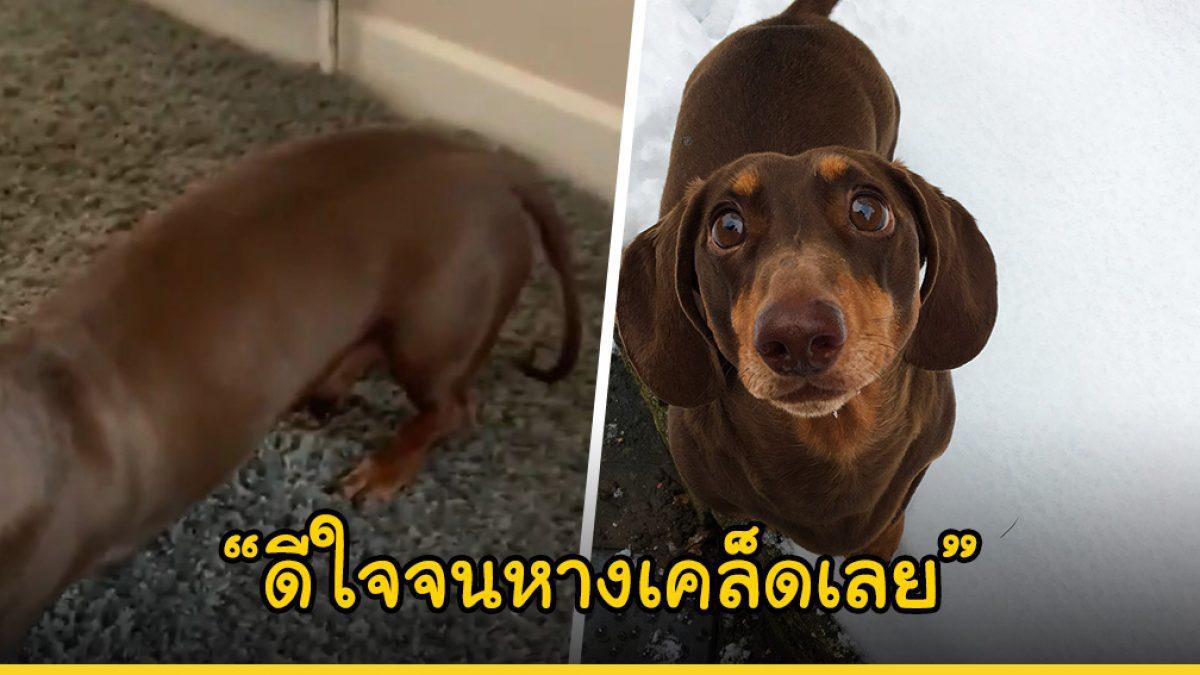 น้องหมาไส้กรอกดีใจจนหางเคล็ด เมื่อได้อยู่กับครอบครัวอย่างพร้อมหน้า หลักพวกเขาถูกกักตัวในบ้านเพื่อป้องกันไวรัส