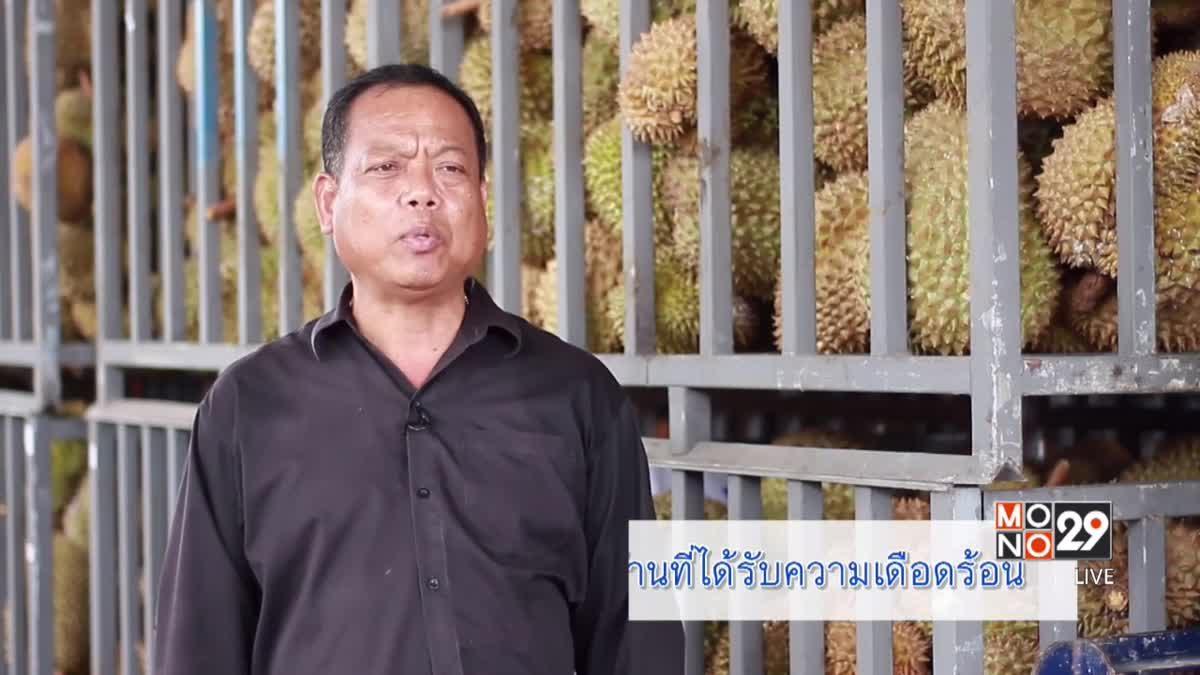 ศูนย์ดำรงธรรมจังหวัดจันทบุรี ล้งทุเรียนด้อยคุณภาพ
