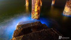 ทะเลบางแสน เรืองแสงสีฟ้าวาววับในยามค่ำคืน ปรากฏการณ์ธรรมชาติที่หาดูยาก