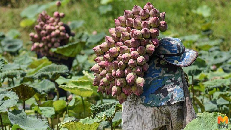 รีบเช็ก!! เงินเยียวยาเกษตรกร 8.25 แสนรายสุดท้าย ได้เงินเดือนแรก 1-2 มิ.ย.นี้