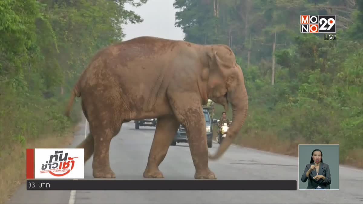 เจ้าหน้าที่ยังไม่พบช้างป่าเขาอ่างฤาไน ถูกรถชนขาเจ็บ