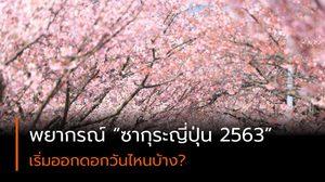 พยากรณ์ ซากุระญี่ปุ่น 2563 (อัปเดตล่าสุด)