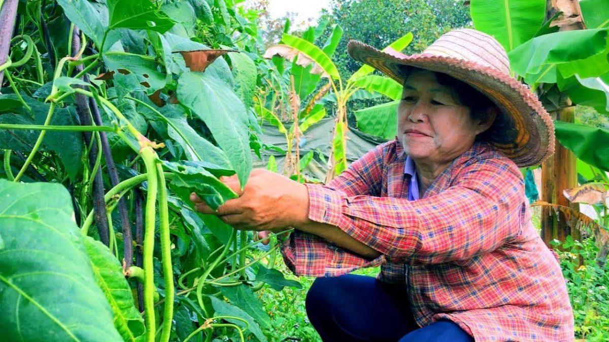บ้านไร่สายทอง ตอน การเริ่มทำเกษตรผสมผสาน เกษตรอินทรีย์ / The beginning Integrated farm and Organic farming