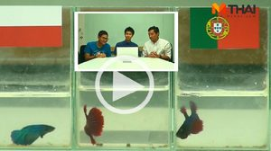 ซี้ซั้วฟันธง! ปลากัดทายผล ยูโร 2016 โปแลนด์ ปะทะ โปรตุเกส (30 มิ.ย.)