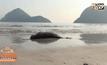 พบซากโลมาเกยหาดสามร้อยยอด จ.ประจวบคีรีขันธ์