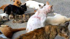 ก.เกษตรฯ ออกกฎ ให้แมว เป็นสัตว์ควบคุม หลังเกิดโรคพิษสุนัขบ้าได้