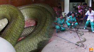 ชาวบ้านแห่ดู จนท.จับ 'งูจงอางยักษ์' ยืนลุ้นกันทั้งหมู่บ้าน!!