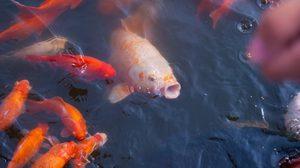 ปลาที่อยู่ในแม่น้ำ จะอยู่ในทะเลได้ไหม