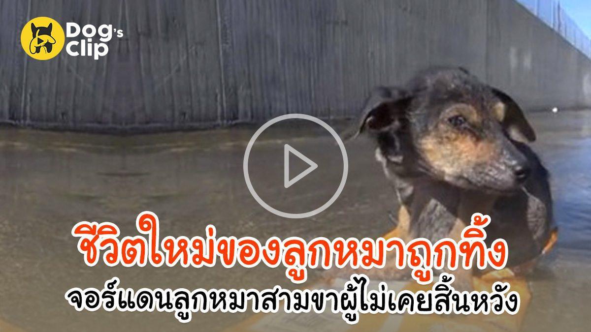 ชีวิตใหม่ของลูกหมาถูกทิ้ง จอร์แดนลูกหมาสามขาผู้ไม่เคยสิ้นหวัง