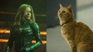 แมว กูส ใน Captain Marvel ชนะใจคนดูหนัง!! หลายคนอยากให้ทำออกมาเป็นหนังภาคแยก