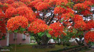 สุดยอด ต้นไม้ใหญ่ จากทั่วโลก