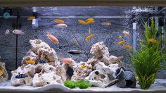 5 ขั้นตอน วิธีทำความสะอาดตู้ปลา ด้วยตัวเอง