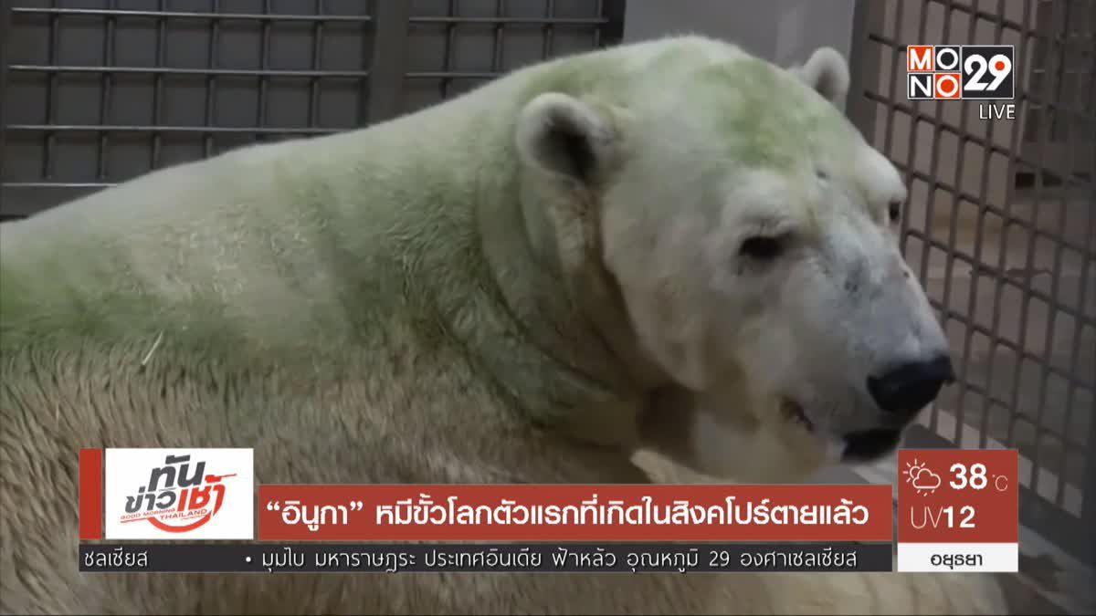 """""""อินูกา"""" หมีขั้วโลกตัวแรกที่เกิดในสิงคโปร์ตายแล้ว"""