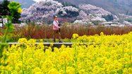 [รีวิว] Hanamiyama Park หุบเขาดอกไม้ แห่งจังหวัด Fukushima ญี่ปุ่น