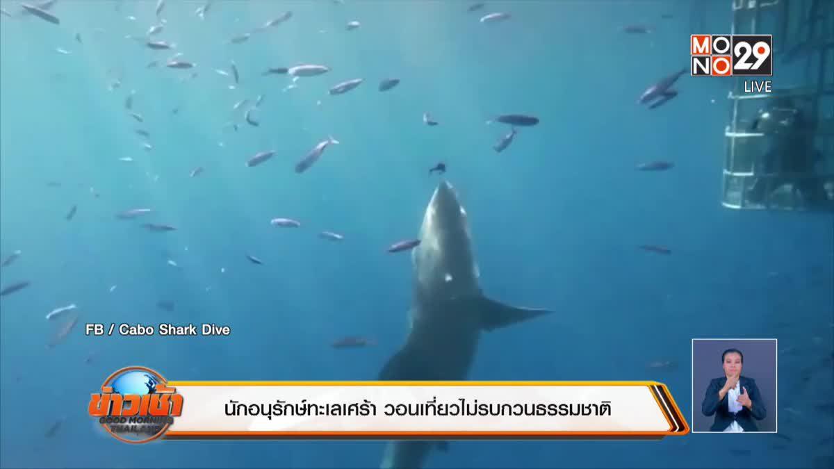 นักอนุรักษ์ทะเลเศร้า วอนเที่ยวไม่รบกวนธรรมชาติ