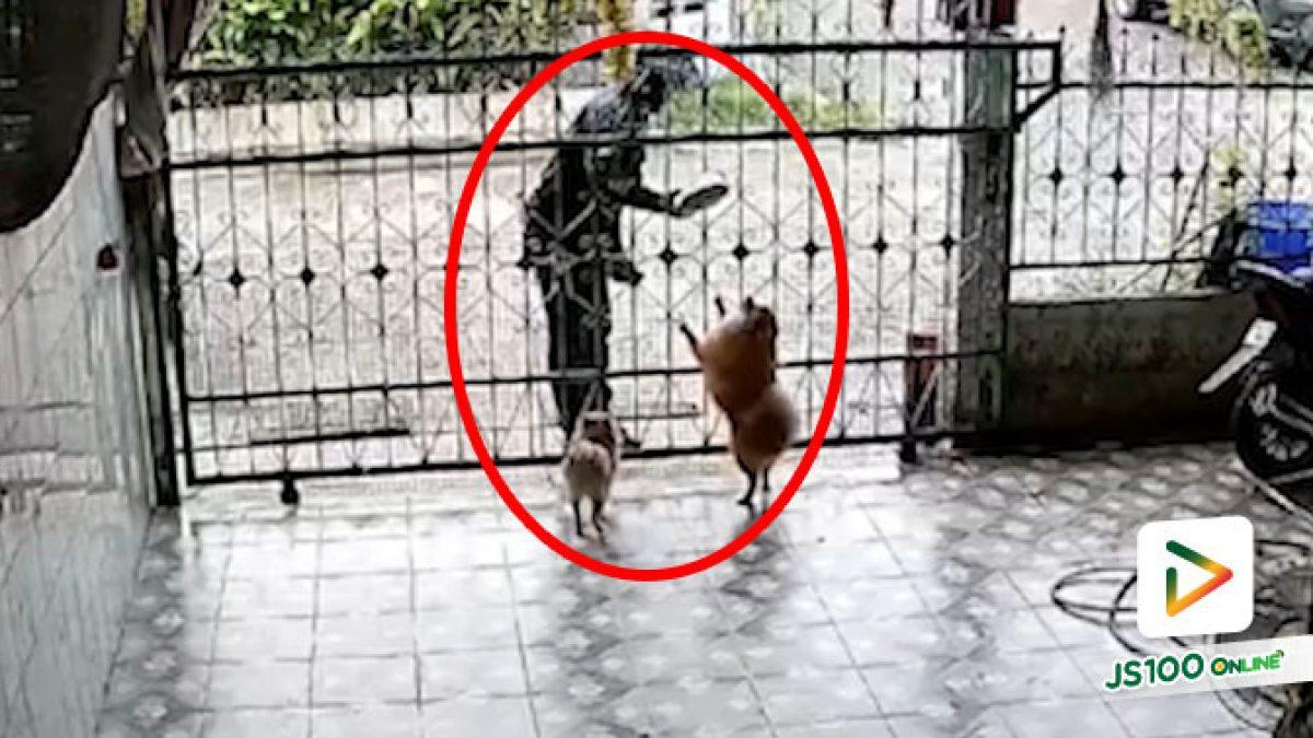 """""""พี่.. หมาเอาไปแล้ว"""" ยืนรอดูก่อนแล้วกันเผื่องานเข้า"""