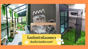 ติดตั้งวันเดียวจบ! ไอเดียทำห้องแมว ด้วยโครงกระจกอะลูมิเนียมสำเร็จรูป