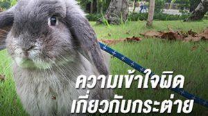 5 ข้อควรรู้ ความเข้าใจผิดเกี่ยวกับกระต่าย