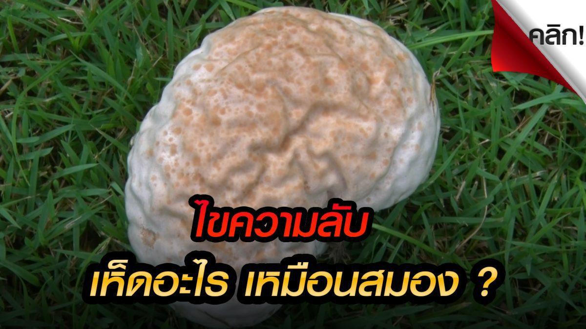 (คลิปแปลกทั่วไทย) ชาวบ้านตกใจ เห็ด อะไรเหมือนสมองเเละมันกินได้ไหมนะ?